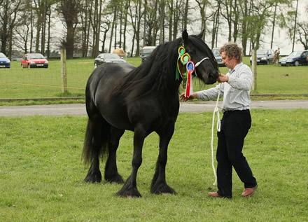 dales-pony