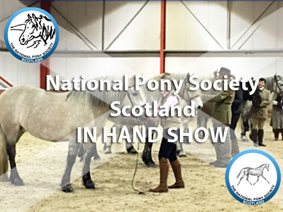 In Hand Show 2016