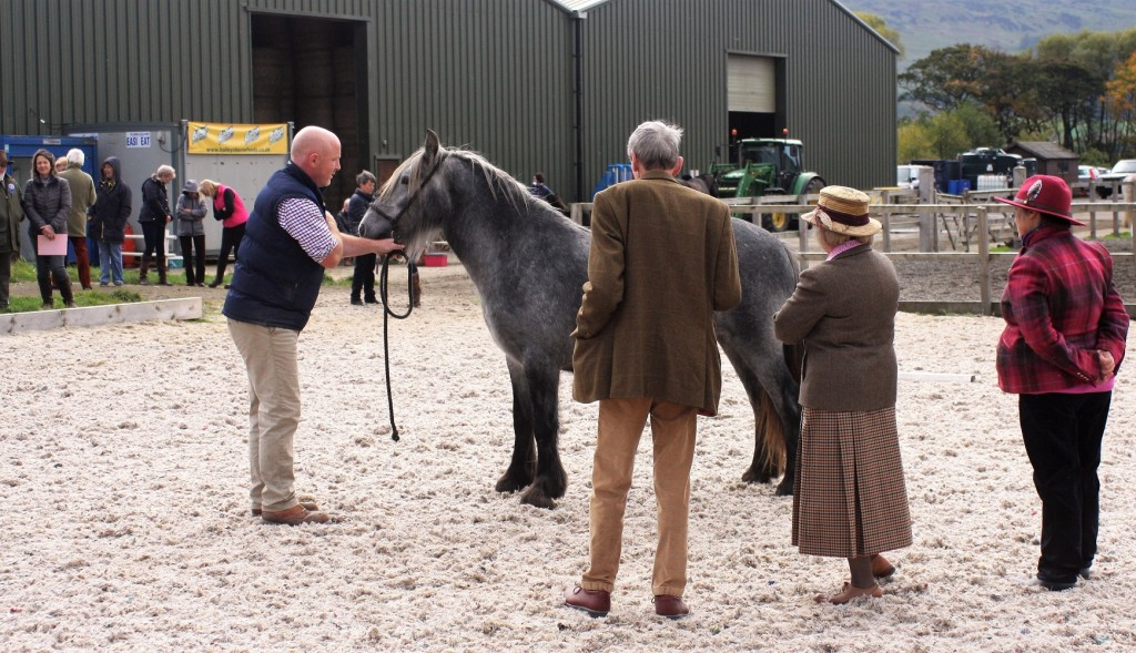 1st large breeds yearling