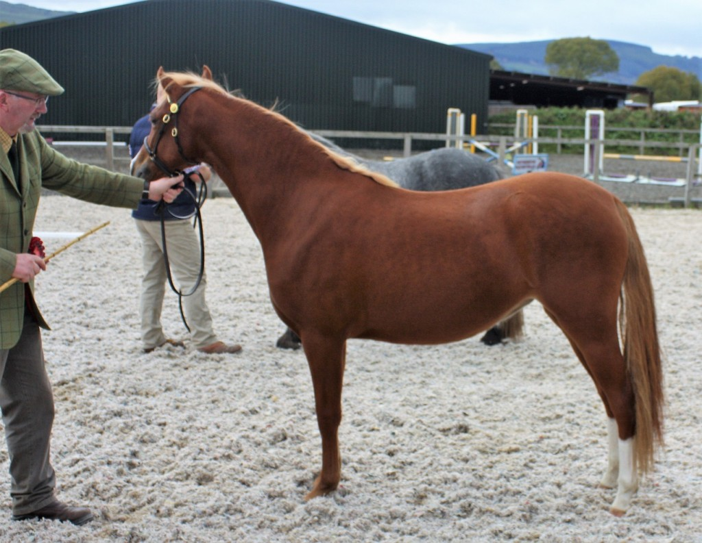 1st small breeds yearling
