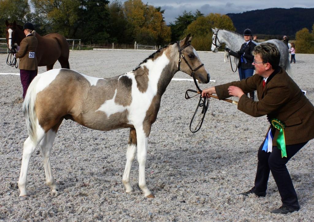 reserve light horse