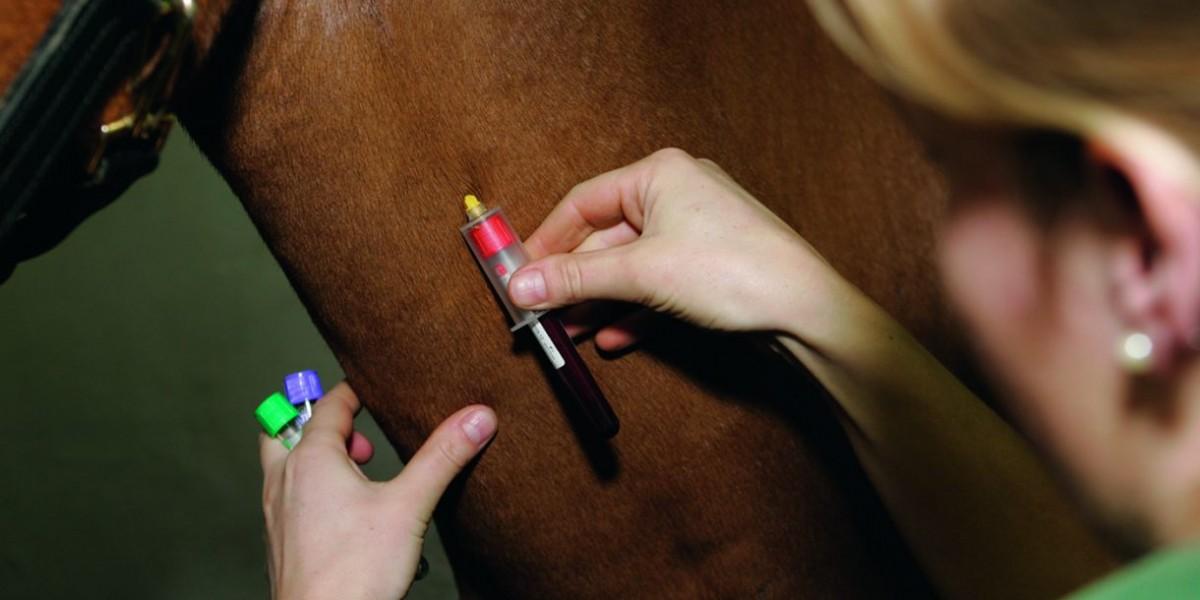 horse-equine-flu-4129730-1220x687